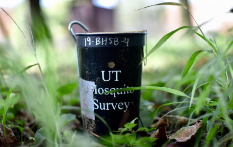 Environmental Club, ecology classes participating in UTK mosquito research
